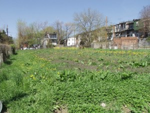 Urban ecosystem with different organisms OR ecological theory (Baltimore Long Term Ecological Research:https://www.lternet.edu/research/keyfindings/islands-green)