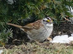 WT Sparrow Feb 2010