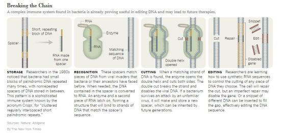 From: https://www.nytimes.com/2014/03/04/health/a-powerful-new-way-to-edit-dna.html