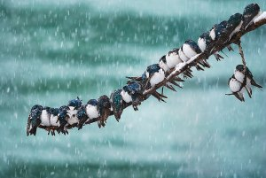 Image credit: Keith Williams (https://www.demilked.com/wild-animals-winter-photography/)