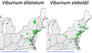 The majority of these viburnum species reside in central New Jersey with populations in New York City and the greater Philadelphia area. However, there are some outlying communities as far west as Illinois.