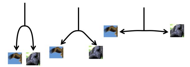 Spaghetti phylogeny