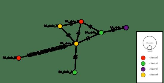 Haplotype Network