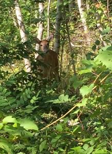 Okay, so we have deer too. Photo: Claus Holzapfel