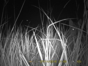 Wait, what is that? Photo: Claus Holzapfel's trap camera