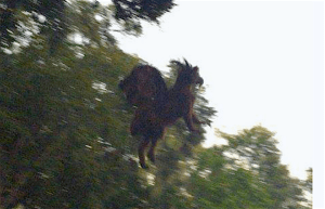 An obviously real photograph of the Jersey Devil Credit: People Magazine