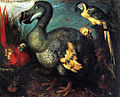 A painting of a dodo made in 1626 by R Savery, given to British Museum after 1750