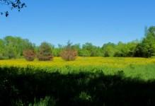 Fox Hill Prairie