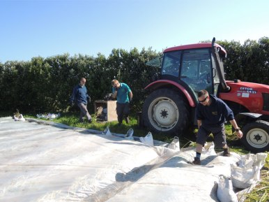 The boys preparing the fields covered in polythene
