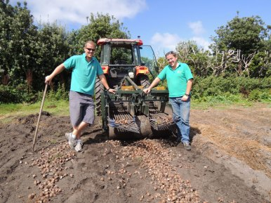 Ploughing up two rows of bulbs
