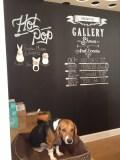 Gus the Beagle