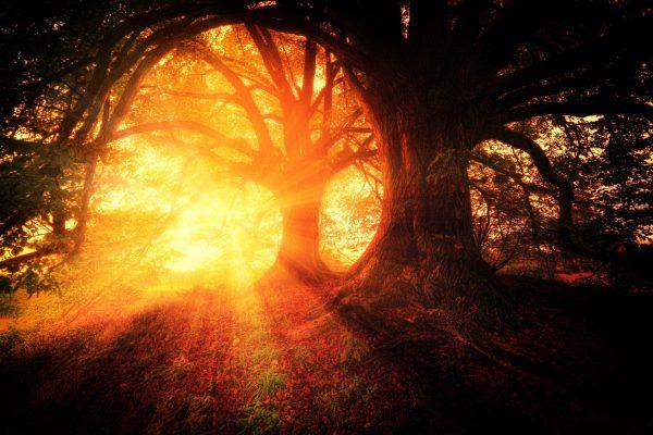 orange sunlight filtered through oak trees