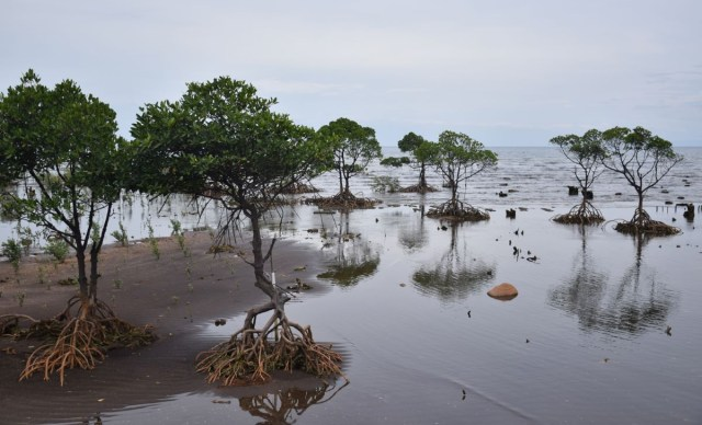 Fungicide, mangroves, vine, shrimp, mind, DOST