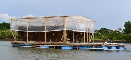 Zambo, seaweed farmers, drying, science & technology, DOST IX