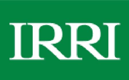 IRRI, webinar, pandemic, Covid-19, health of communities