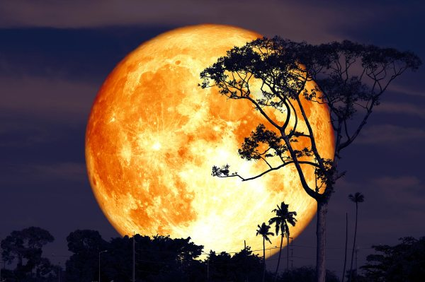 The Next Full Moon Is the Buck Moon – Here's Everything ...