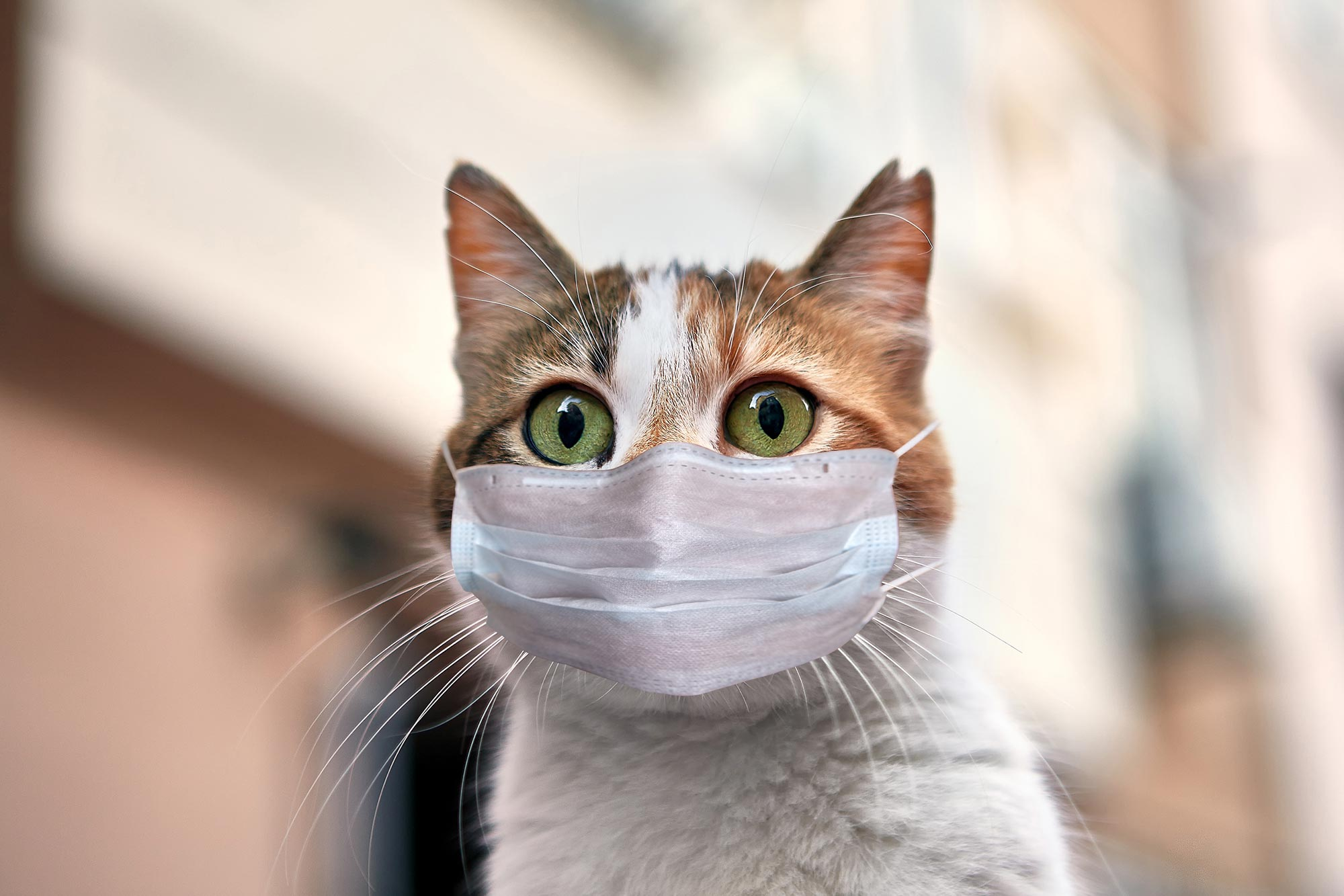 Warning More Cats Might Have Covid 19 Than First Believed