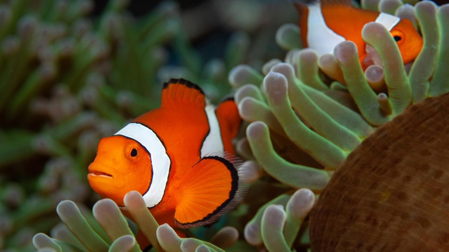 Bad News For Nemo Species Can T Adapt To Rapid