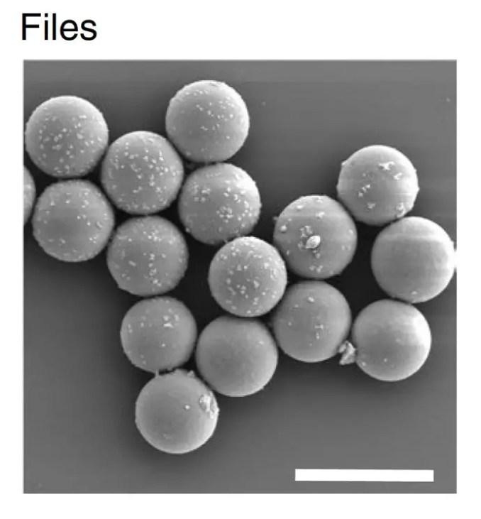 DNA Files Photo