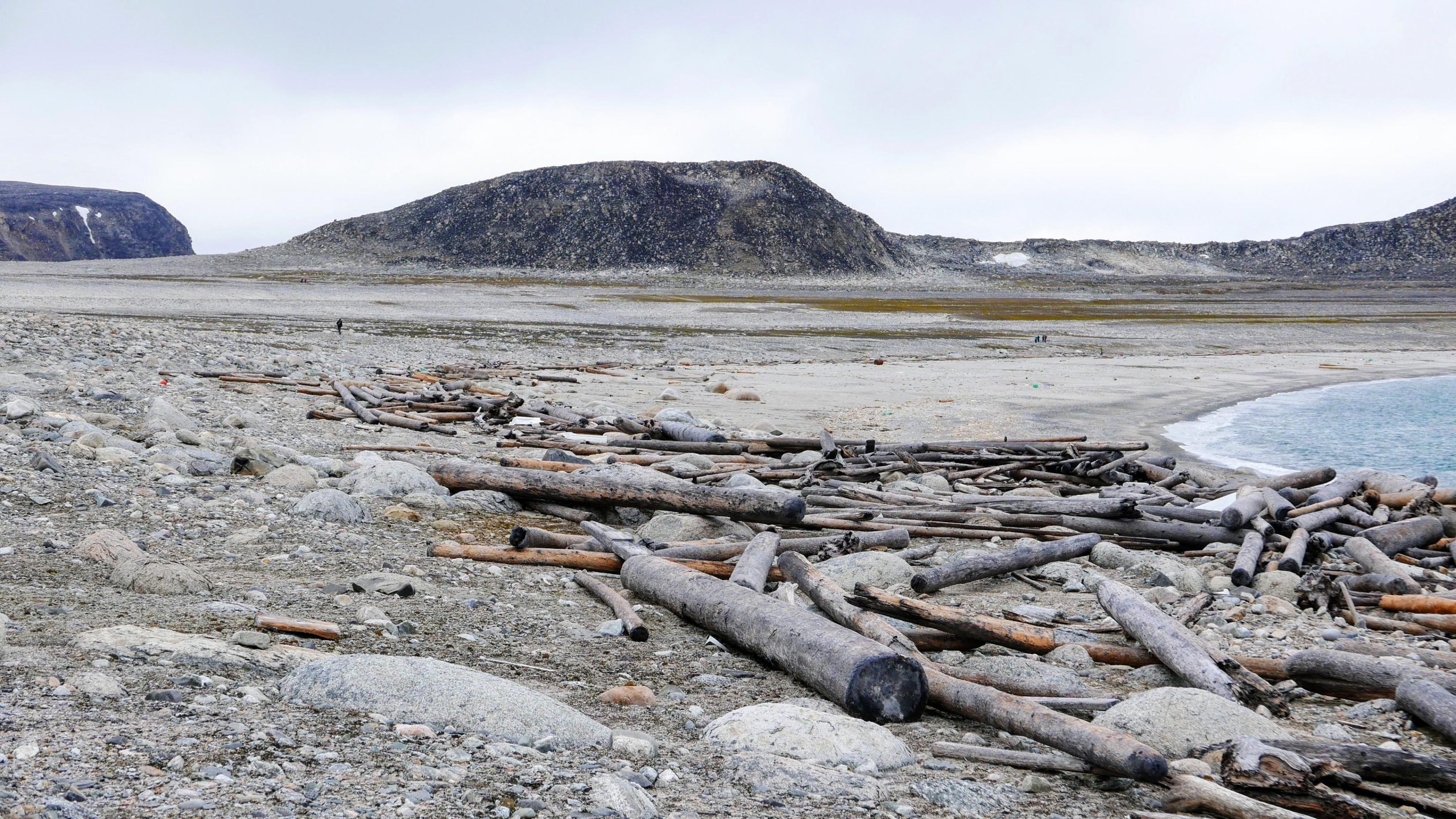 Driftwood on Svalbard Beach scaled, Ancient Driftwood Tracks 500 Years of Arctic Warming, Currents, and Sea Ice, HOPE, ,Ancient, Arctic, Currents, Driftwood, ice, science news, Sea, SPACE, spacelivenews, tracks, warming, Years, SpaceLiveNews