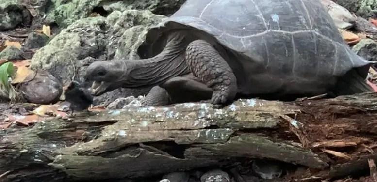 Giant Tortoise Attacks Bird 1