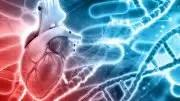Heart Cells' Environment a Major Factor in Heart Disease