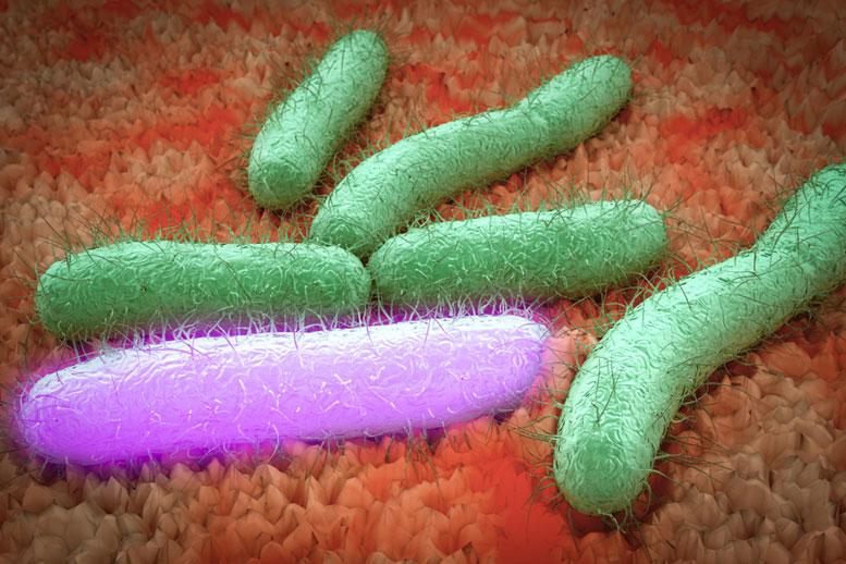 MIT Chemical Engineers Boost Bacteria's Productivity