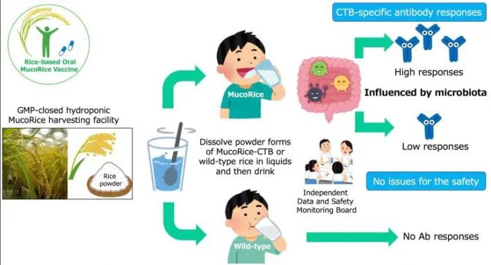 MucoRice-CBT Aşı Denemesi