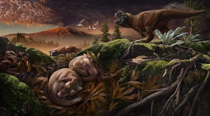 Reconstructed Environment Origolestes lii Died