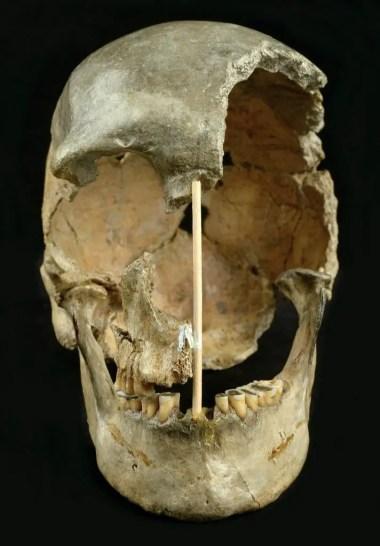 Zlatý Kůň Skull