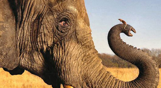 elephant-mouse-trunk