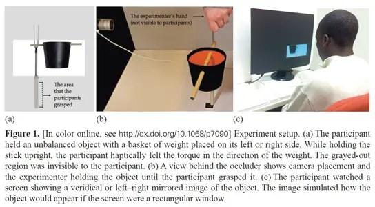 figure-study-perception-haptic-information
