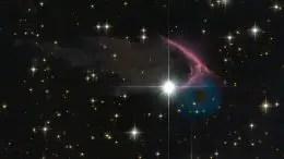 frEGGs-cellent Discovery