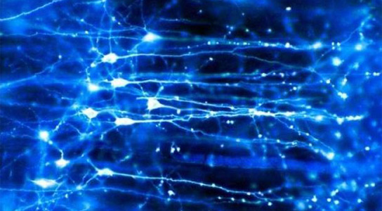 optogenetics-brain
