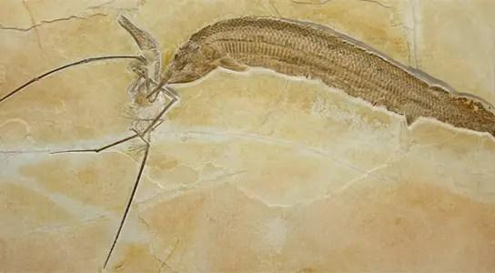 pterosaur-eaten-ganoid-fish