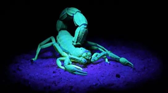 scorpion-venom-tumor