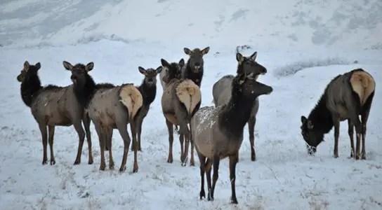 vigilant-elk