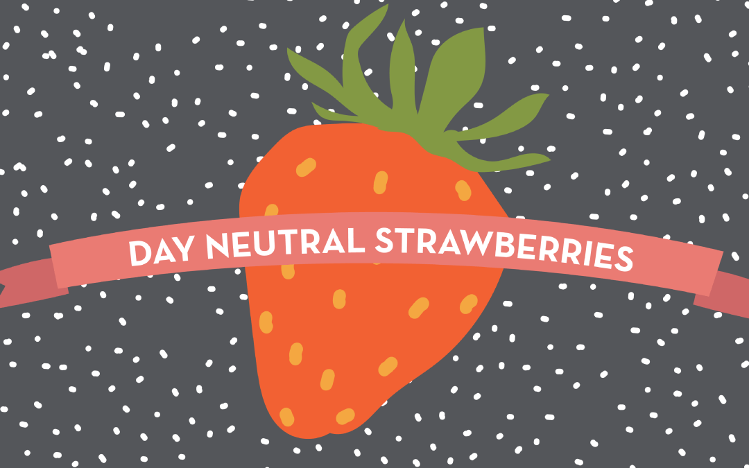 Day Neutral Strawberries Infographic