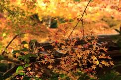Autumn of Orange