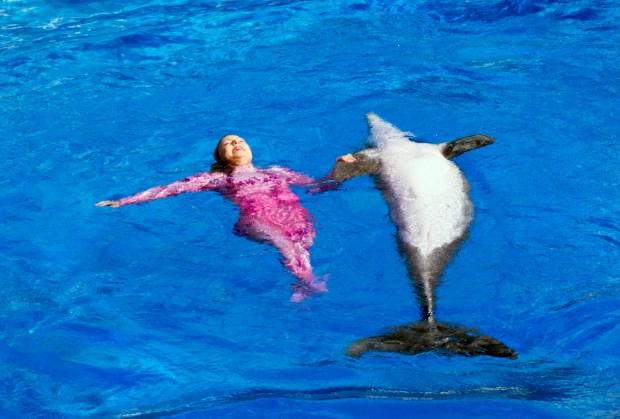 A former Disney Imagineer's guide to SeaWorld Orlando – Press Enterprise