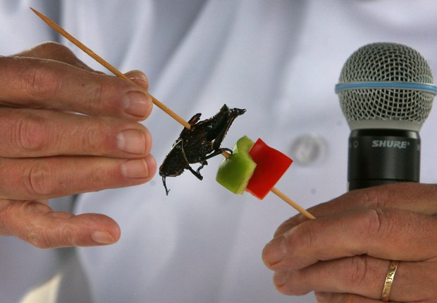 Bug Chef David George Gordon prepares an edible cricket kabob during last year's Insect Fair in Riverside. David Bauman, The Press-Enterprise/SCNG