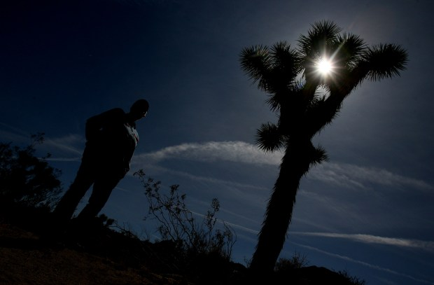 The Joshua Tree is not a tree or a cactus. It's a member of the yucca family. ORG XMIT: RIV1003071614280052
