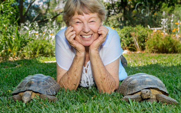 """Linda Crawford, at her home with two desert tortoise waiting to be adopted in Arcadia Tuesday, May 2, 2017. Crawford is the adoption chair of Foothill Chapter of the California Turtle and Tortoise Club. Club members of 200 pet desert tortoises in SoCal up for adoption. Even though they're listed as """"threatened with extinction,"""" they can't be returned to the wild because they may spread disease. (Photo by Walt Mancini/Pasadena Star-News/SCNG)"""