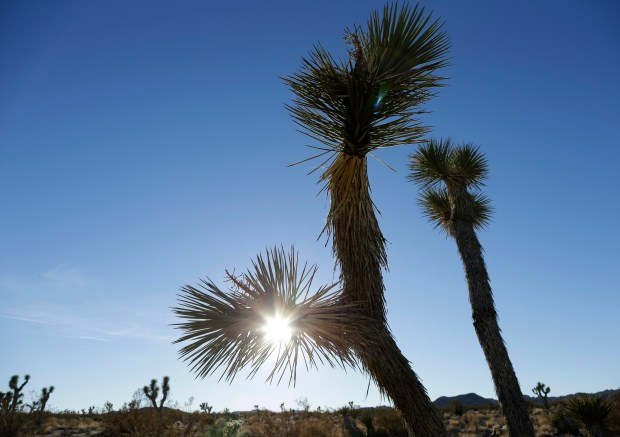 The sun sets behind joshua trees in Joshua Tree National Park Wednesday, Jan. 16, 2013, in Twentynine Palms, Calif. A fee increase is proposed at Joshua Tree. (File photo by Ben Margot, AP)
