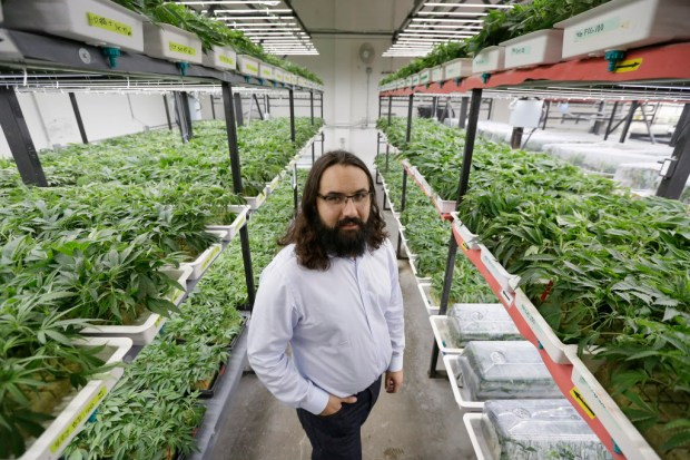 In this May 3, 2017, photo, Dan Grace poses for a photo in the marijuana production facility of the Dark Heart Nursery in Oakland, Calif. The City of Oakland is prodding cannabis businesses to pair with minority applicants if they want a license to sell, manufacture, cultivate or distribute weed in 2018 as part of California's massive expansion of legal cannabis. (AP Photo/Eric Risberg) ORG XMIT: FX402