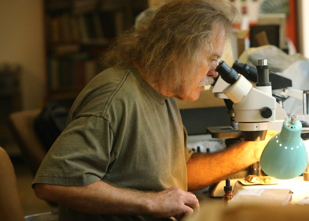 Lichen curator Kerry Knudson looks at lichen under a microscope at the UCR Herbarium on Monday, June 19, 2017. (Stan Lim, The Press-Enterprise/SCNG)