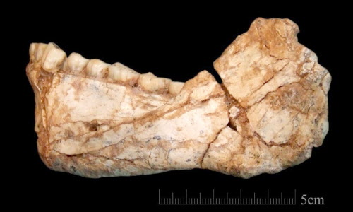 An almost complete adult mandible found at Jebel Irhoud. MUST CREDIT: Jean-Jacques Hublin, Max Planck Institute for Evolutionary Anthropoolgy, Leipzig
