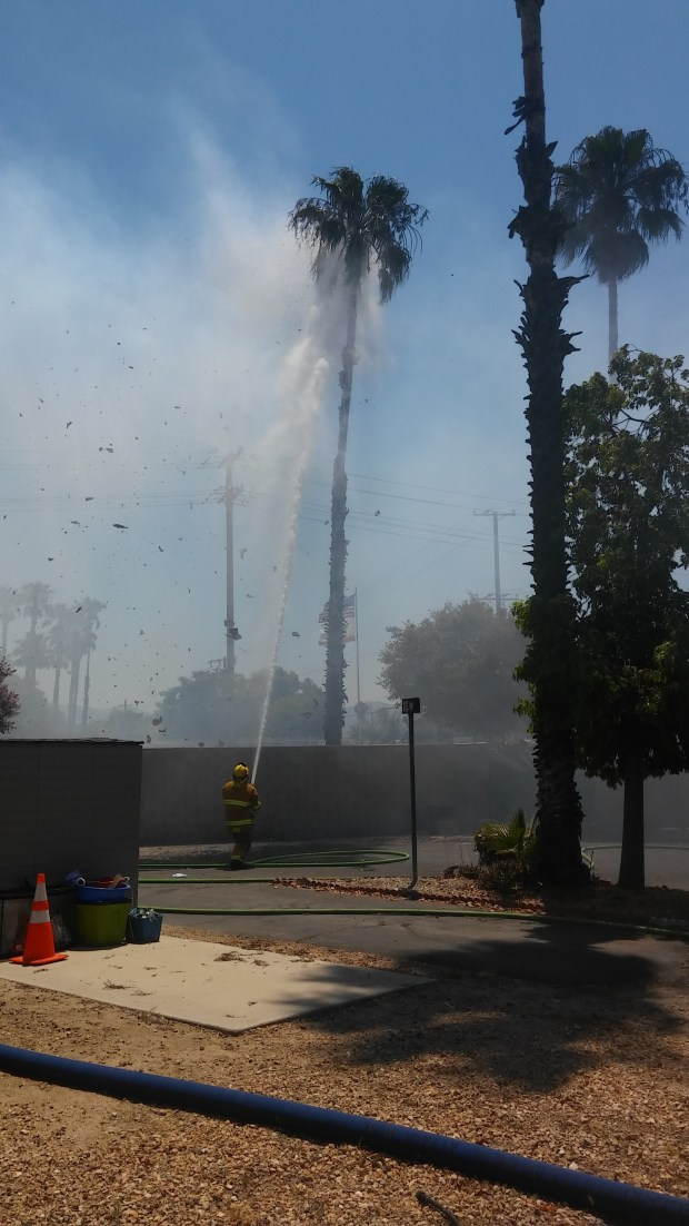 Three palm trees caught fire after a blaze engulfed a nearby mobile home on Thursday, June 22, officials say (Craig Shultz, The Press-Enterprise/Southern California News Group).