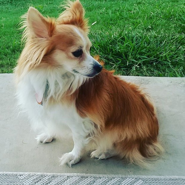 Caroline and Jeremy Gumber had only been living in Irvine for two weeks when their beloved dog, Toby, went missing.