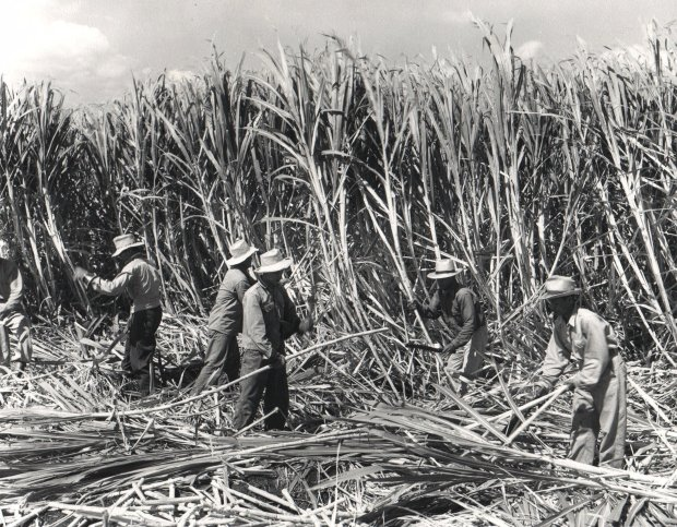 Workers harvest sugar cane on a plantation on central Oahu, Hawaii, in the 1940s. The first sugar plantation was established on Kauai, Hawaii in 1835. Sugar and pineapple would dominate the economic, social and political landscapes of Hawaii for more than 125 years through a feudal system that made workers virtual slaves. It would take most of the next century to unionize plantation workers and lay the groundwork for a political upheaval that eventually brought statehood. (AP Photo/Hawaii State Archives)